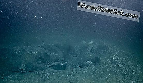 500 'Champagne' Methane Seeps Discovered Off Pacific Coast