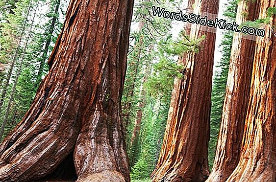 Land Of Giants: Sequoia En Kings Canyon National Parks