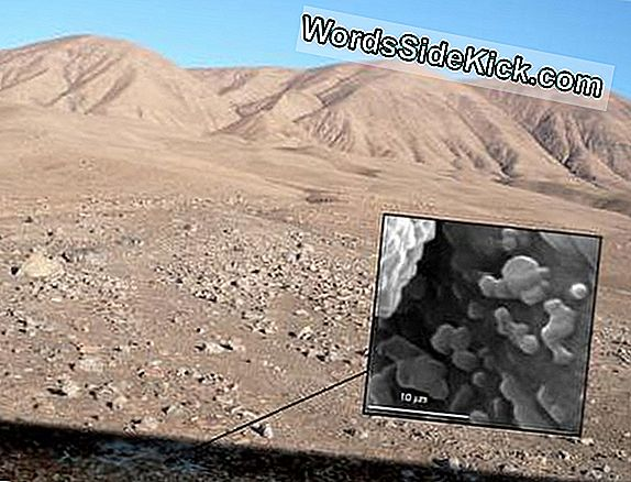 Oasis Of Tiny Life Discovered Beneath Desert