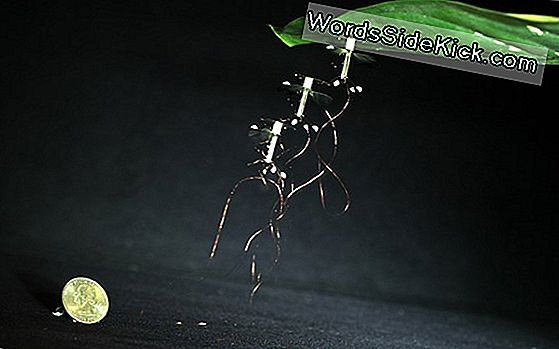 Flying Insect-Inspired Robot Kan 'Middenin' Blijven 'Rusten'