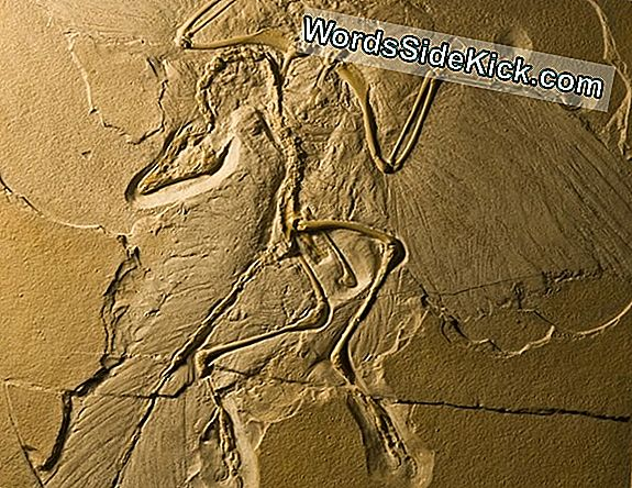 Archaeopteryx: The Transitional Fossil