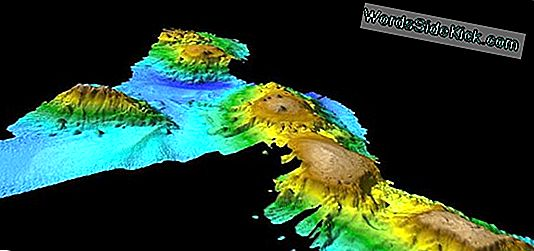 Lost Chain Of Underwater Volcanoes Is Een Gigantische Walvissnelweg