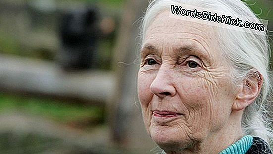 De Ce Jane Goodall Crede În Bigfoot (Video)