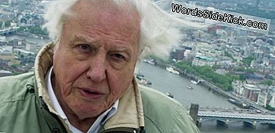 David Attenborough Ile Londra'Daki Tour Of Natural History Museum