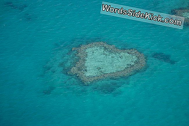 Earth Valentine: L'Australia'S Heart Reef