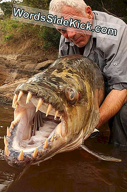 The Reality Of River Monsters